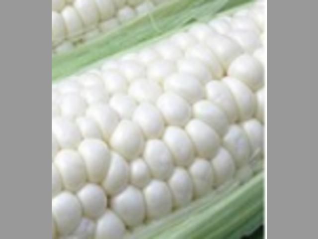 MAIZE maíz MAIZ NON GMO CIF BOMBASSA KENYA 1 SPOT 200,000 TM