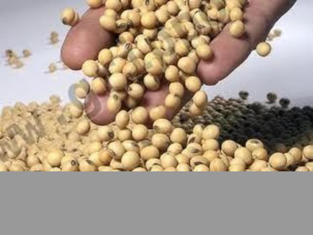 Soja en Perú para el Mundo