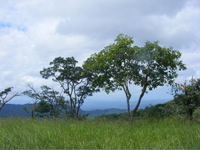 Se vende Finca de 145 Hectáreas en Liberia