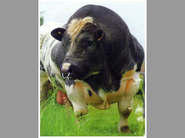 ventas al por mayor y menor alimento balanceado para todo tipo de animal