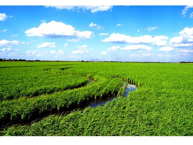 Campo agricola ganadero en Uruguay 4500 hectareas