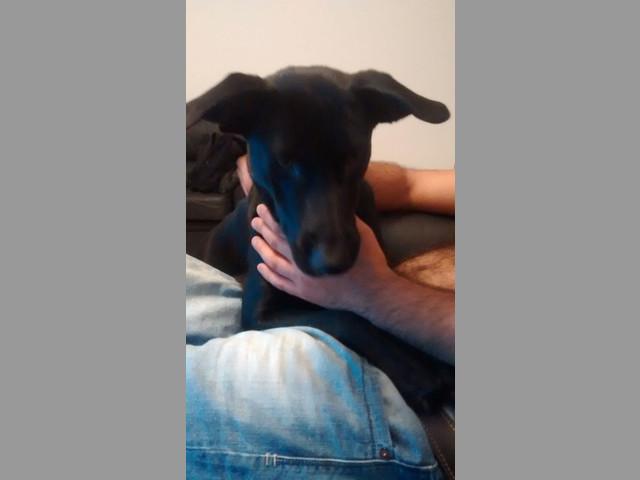 Cachorra de 6 meses en adopción URGENTE