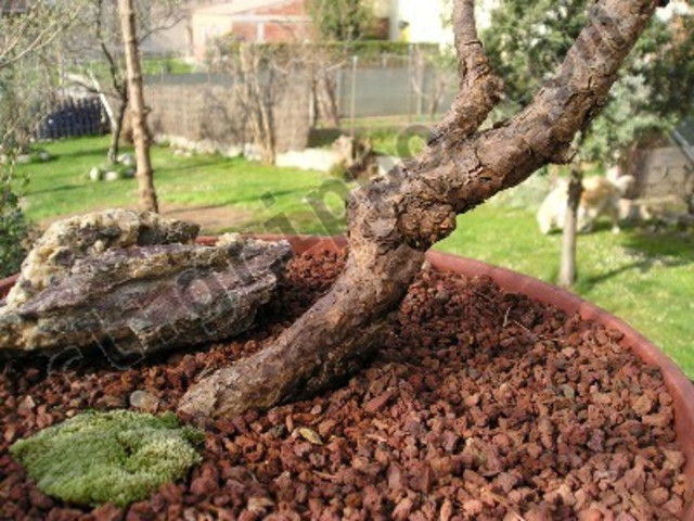 Corteza de rbol para jardin - Arboles para jardin ...