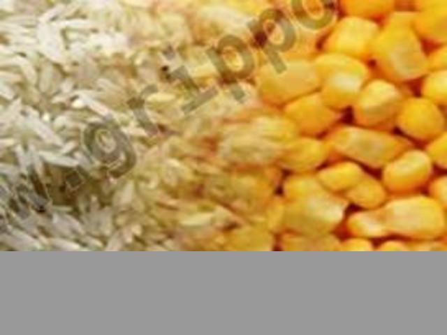 Venta de Arroz , Maiz . Semolina de Arroz y Maiz