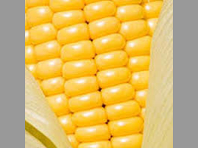 NEW 2017 Yellow Corn # 2 GMO