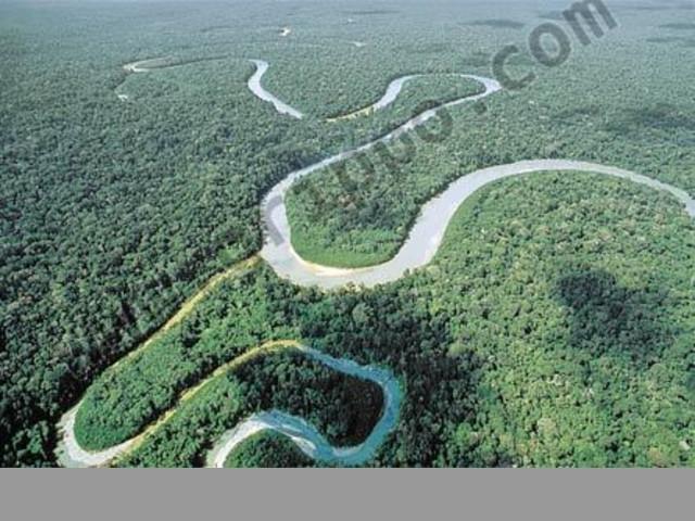 VENDO TERRENO EN EL AMAZONAS