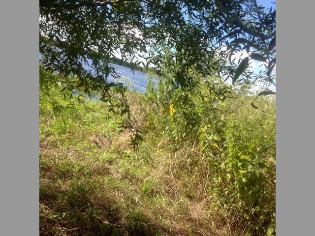 Campo en Venta en Paraguay - Alto Paraguay 1.374 Has. Costa sobre el Rio
