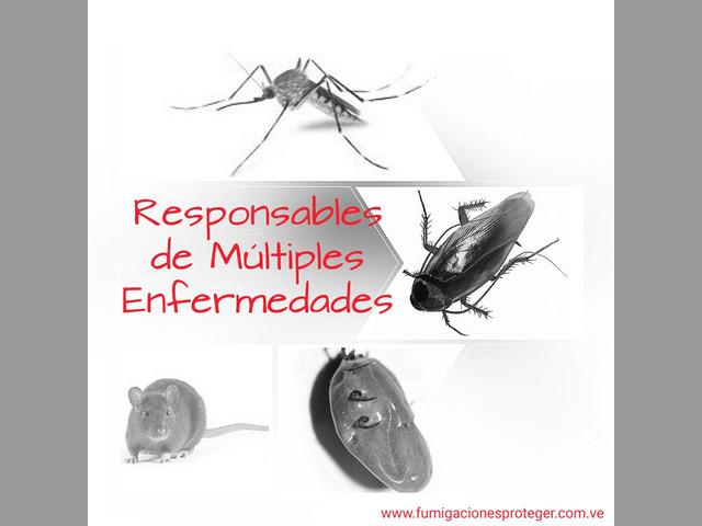 Fumigaciones para Centros Comerciales Exterminamos Insectos y Roedores